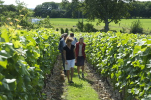 Vandring i vinodlingen