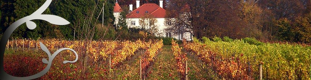 Kelleris fina vingård på Själland.