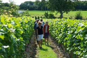 vingårdsvandring